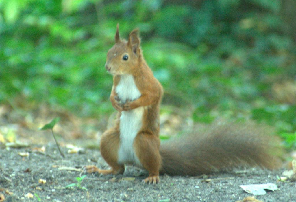 Dlaczego wiewiórki nie zasługują na więzienie?