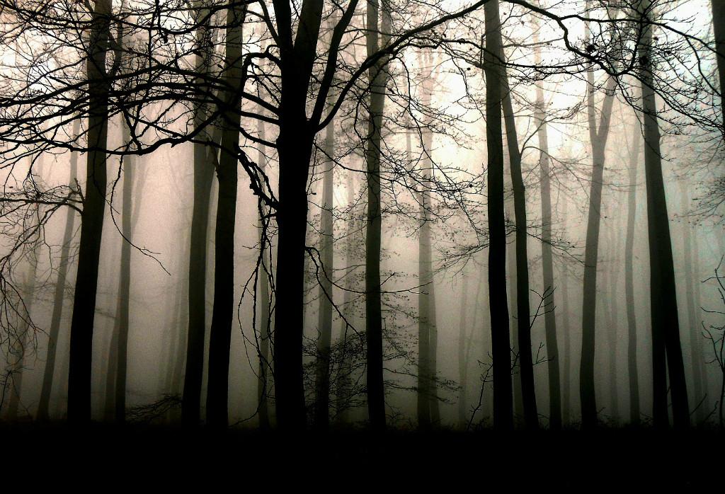 O lęku, który spotkałem w lesie kabackim